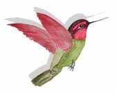 hummingbird LOGO point right