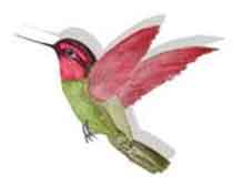 hummingbird Web LOGO point left